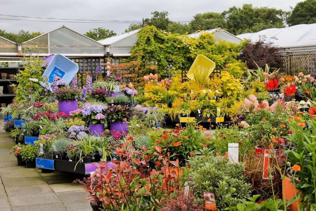 Our experts are ready to help you choose the right out-of-doors plants