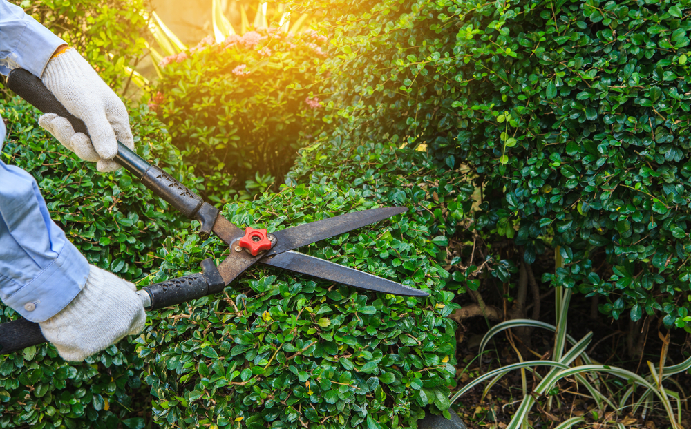 Cowell's Garden Centre keeps a range of pruning equipment with many types of shears near Ponteland. Visit us to get the best pruning tools for your garden.