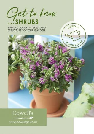 Get to know...Shrubs