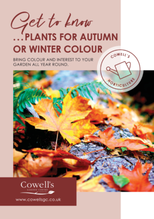 Get To Know...Plants For Autumn or Winter Colour