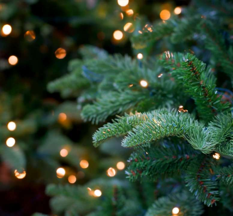 Cowell's Garden Centre presents a wide range of Christmas trees near Durham. We grow them in our nursery and in variety. Visit in autumn to see our displays.